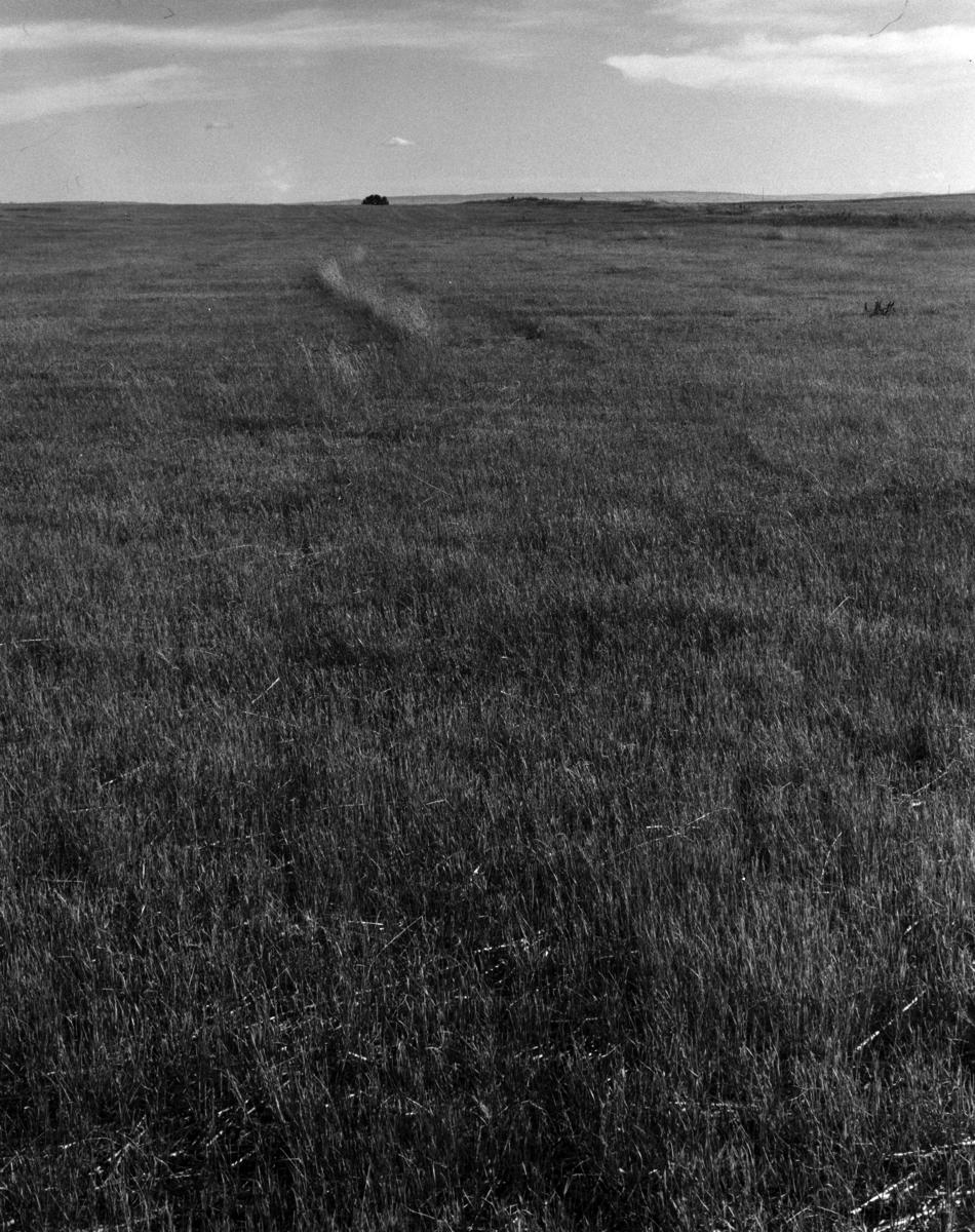 Hay field 4x5 300