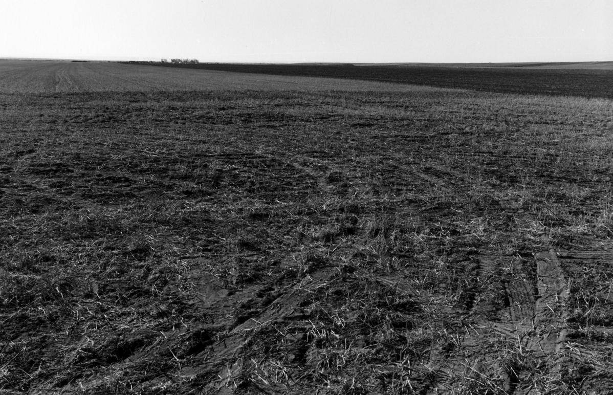 Field Tracks 300
