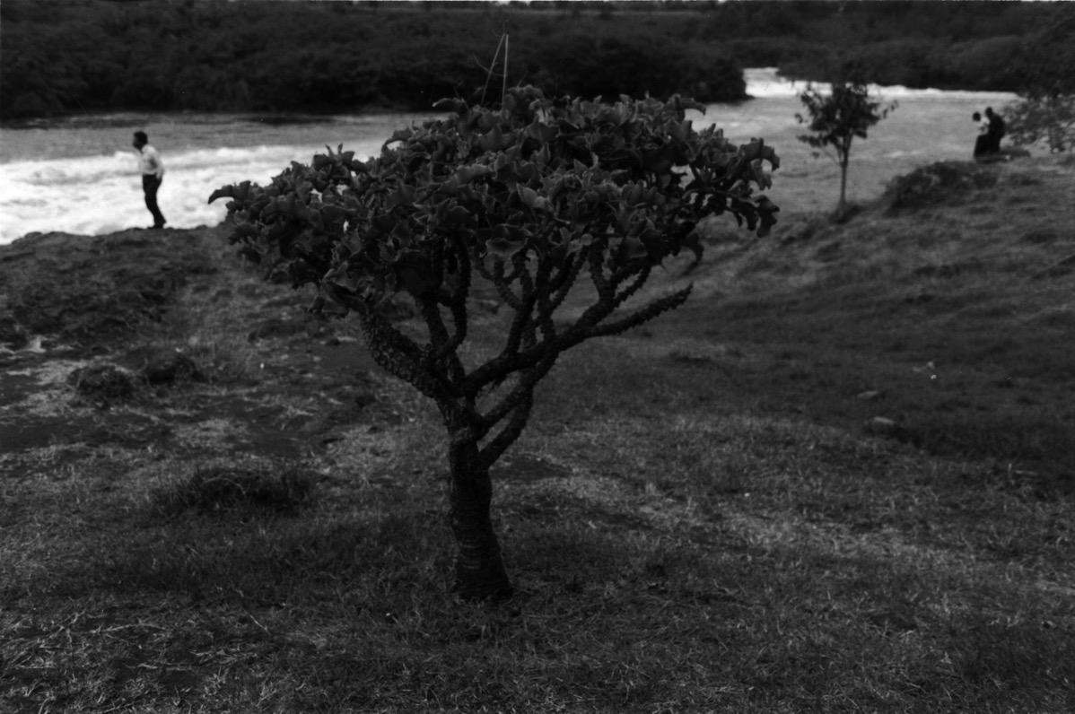 Tree Jinja Uganda 2005